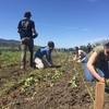 Students participate in a Farm and Field Volunteer Day as a part of SOU's Earth Week.