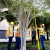 UTRGV Tree Campus Team at Work