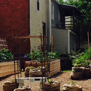 The Learning Garden at Virginia Commonwealth University