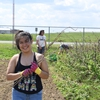 Campus Farm members Donna and Mayra ('19) weeded raspberry bushes at the one-acre DePauw organic farm.