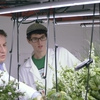 Dr. Paul Gauthier and Seth Lovelace (Mathematics, class of 2020) collecting data on plant growth and energy consumption in Princeton University vertical farm.