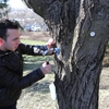 Student tapping maple tree