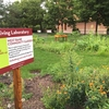 University of Minnesota Living Lab Project: West Bank Community Garden