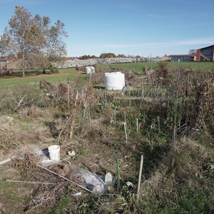 The Shawneetown Gardens: a Sustainable Campus Community Garden Cultivated through Creation of Place