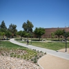 Arbor Court Turf reduction and Drought Tolerant Planting
