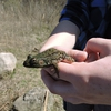 Student Holding a Green Frog