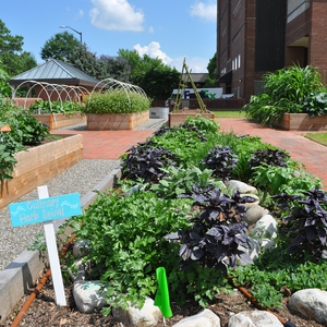 Edible Campus Garden at UNC Chapel Hill