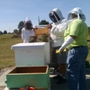 Experiental applied learning in beekeeping for Leadership in Environmental Stewardship e-badge