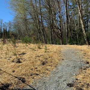 Ecological Restoration on BCIT Burnaby Campus