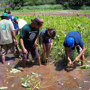 Kaua'i Community College - Ho'ouluwehi: The Sustainable Living Institute of Kaua'i