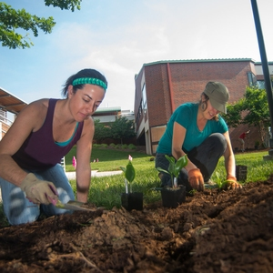 Infusing Sustainability into High-Impact Learning Practices at NC State University