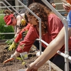 Students engage in hands-on planting in the UT Dallas Community Garden donation plot