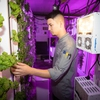 Chef Nathan Fraza checks on the plants growing in the hydroponic growing room.