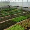 Central Community College Columbus, NE greenhouse tour