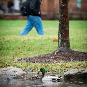 Indiana State:  Green Infrastructure for Water