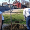 In honor of Earth Day, The Environmental Cooperative recruited students to help plant street trees in Poughkeepsie.
