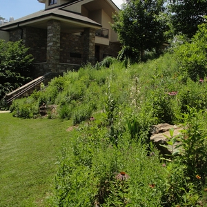 Warren Wilson College Native Grass Landscaping: Changing the Way We Plant the Campus to Reduce Greenhouse Gas Emissions, Improve Wildlife Habitat and Minimize Maintenance