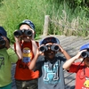 Humber College Forest Nature Program - Binoculars