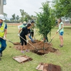 ASU Students and APS (local utility) Employees Plant a Tree
