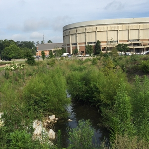 Parkerson Mill Creek restoration after one growing season