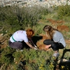 Planting Seedlings, breathing new life: Reforestation of Hymettus Mountain by ACG