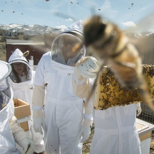 Student Beekeepers: Almost as Busy as Bees