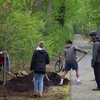 Penn State's Eco Action chapter helped the Office of the Physical Plant (OPP) plant two red oak trees on Tuesday, April 25 along the President's house driveway. They learned how OPP is improving biodiversity by planting a variety native tree species to replace the old, dying trees on campus.