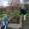 Staff and student members of the Campus Garden Advisory Committee work to prepare the campus garden for spring planting.