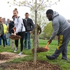 Illinois students shovel mulch around the base of campus' newest tree feature — a sapling white oak.