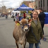 Chevy the cow makes an appearance at UConn's annual Earth Day Spring Fling  #earthday #uconn #livegreenbleedblue