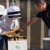 Speech faculty Brent Adrian showing students the campus bee hives