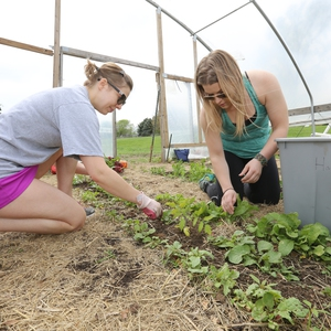 SSC Officers volunteer to harvest produce grown by JCCC Sustainable Agriculture Students, 2014.