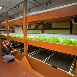 Aquaponic food production as an integrating context for campus sustainability