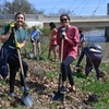 Ohio State students remove invasive species from the banks of the Olentangy River through campus.