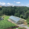 Urban Agriculture Greenhouse - Summer 2018