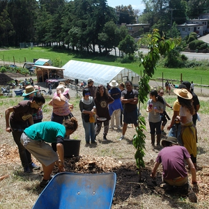 Orchard Planting: Earth Week