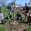 Ohio State students help increase our tree canopy on campus by planting trees along the Olentangy River on campus.