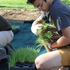 A student helps with installation of a student-funded rain garden at Indiana University in Bloomington
