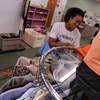 Kent State staff sorts clothing at the Phyllis Zumkehr County Clothing Center. Kent State's annual move out program, Throw N Go program donates an average of 42 tons of clothing, furniture, and nonperishable goods a year, (about 20%) of the 215 tons Phyllis Zumkehr County Clothing Center diverts annually. The Phyllis Zumkehr Portage County Clothing Center offers gently used clothing, household items and appliances to families and individuals in need at absolutely no cost.