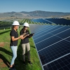 Cal Poly students conducting research at the Gold Tree Solar Farm