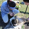 Sampling Benthic Macroinvertebrates during a BioBlitz event