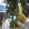 The Hive: Dickinson's Beekeeping Cooperative