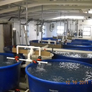 One Fish, Two Fish, Red Fish, Green Fish: How URI Saves 40 Million Gallons of Water a Year