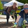 PCC staff plant learning garden