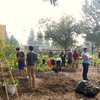 Food Garden Workday