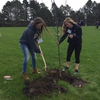 The UWW Sustainability Office partnered with the UWW Honors Student Association in planting 40 apple trees near one of the campus residence halls. Future apple harvests will be added to the existing donations provided by the Sustainability Office Campus Garden to the local Whitewater Food Pantry.