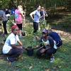 During Green Apple Day of Service, Emory students volunteer to plant pollinator-friendly stream buffers on campus as part of Emory's Pollinator Protection Policy