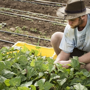 Collaborations for growing the Virginia Tech Farm to Campus Program