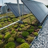 Green roofs and solar thermal atop AU's Mary Graydon Center help reduce stormwater runoff and provide hot water for AU's dining hall.