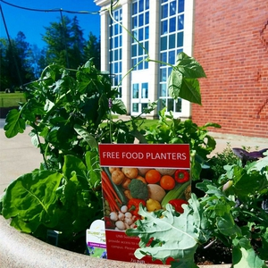 Free Food Planters at University of New Brunswick